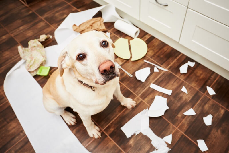 how-to-pet-proof-your-home.jpg