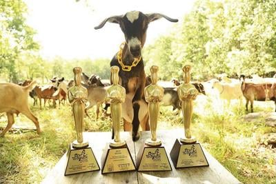Big Picture Farm wins specialty food awards