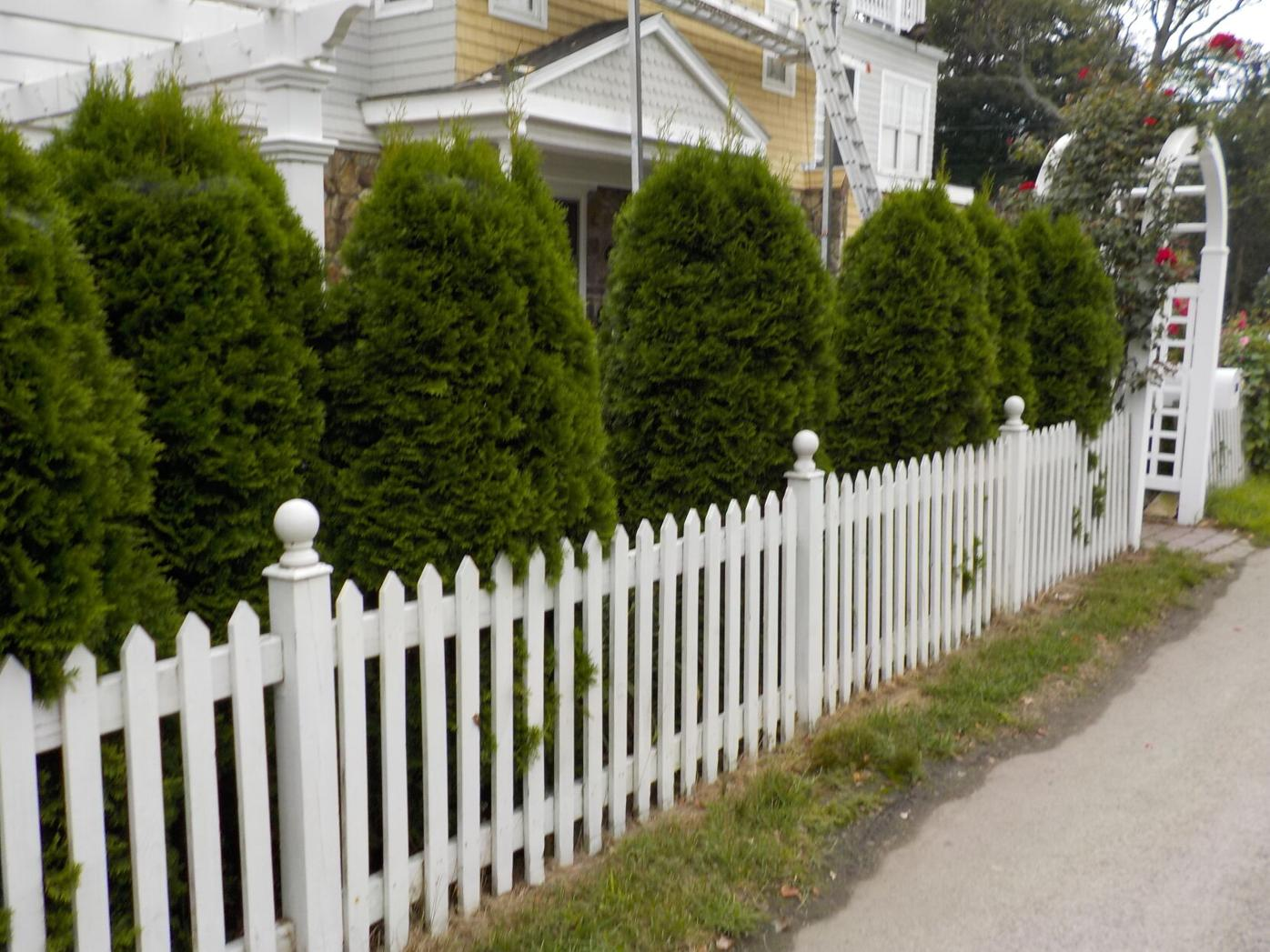 This picket fence is supplemented with a living hedge to block the view from the street.JPG