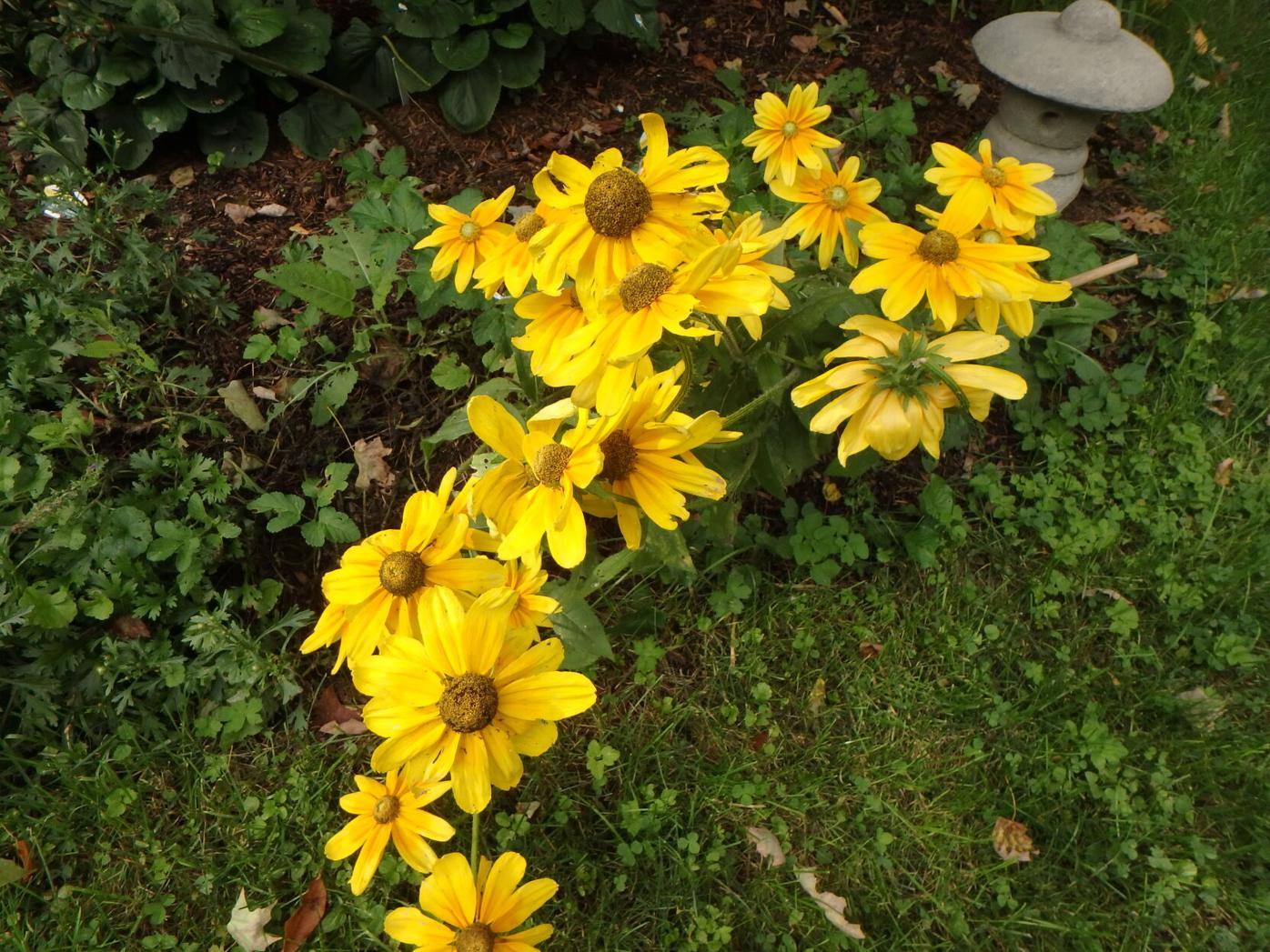 Planting with compost envigorates plants nicely.JPG