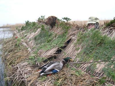 Bird hunt