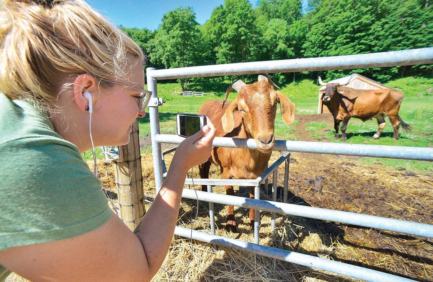 Retreat Farm brings goats inside, virtually
