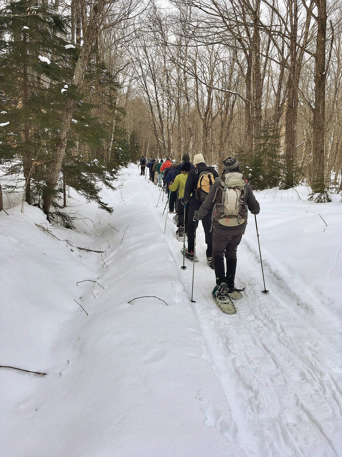 3,500 acres on Glebe Mountain to be conserved