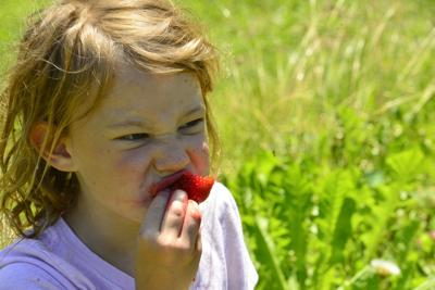 Strawberry fields ... forever