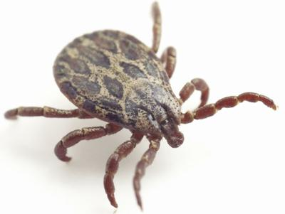 Create a safe, tick-free zone in your yard