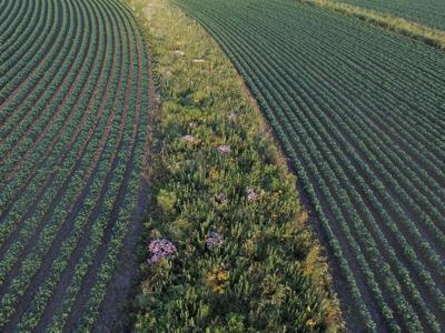 Weaving strips of prairie into a sustainable solution