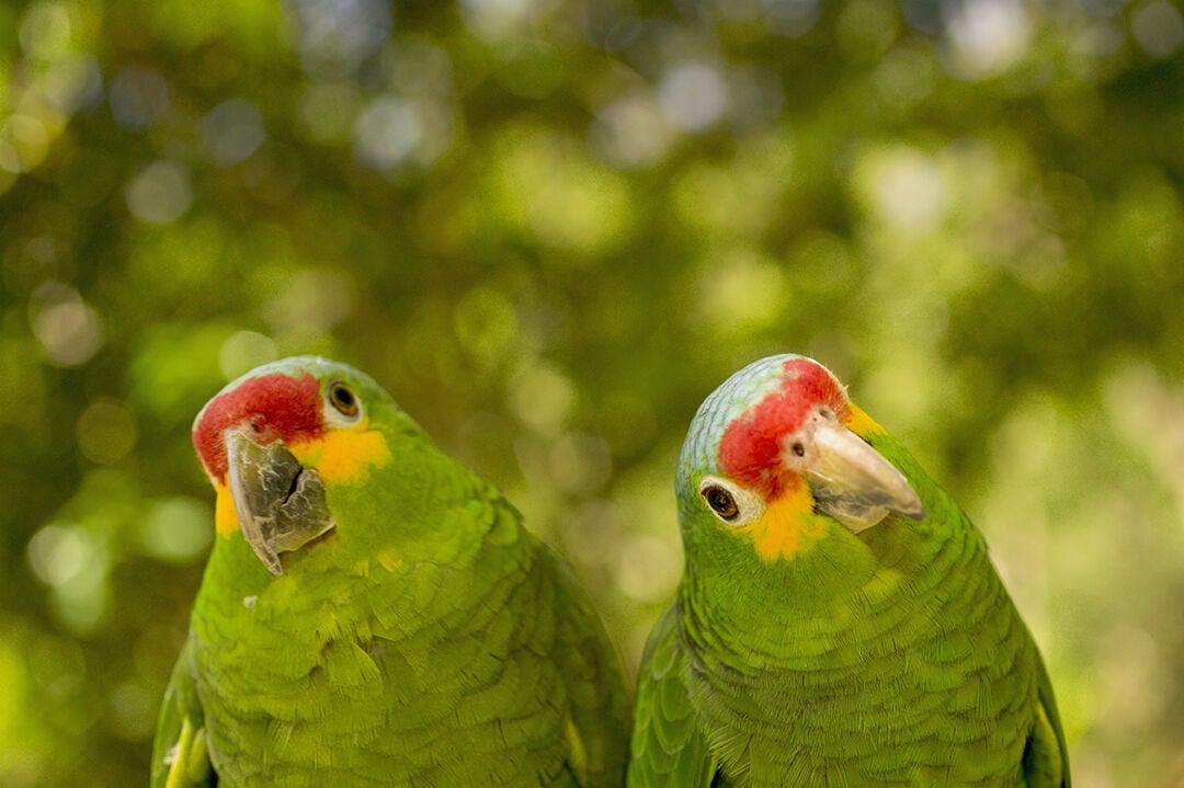 Curious parrots