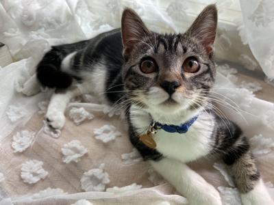 Cat Charli