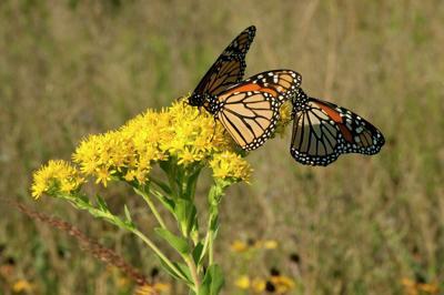 2837696+092216.RUR_.NRN_.PollinatorResolution 016.jpg