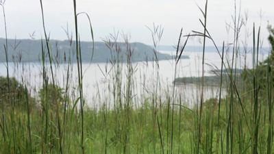 Frontenac overlook tall grass.jpg