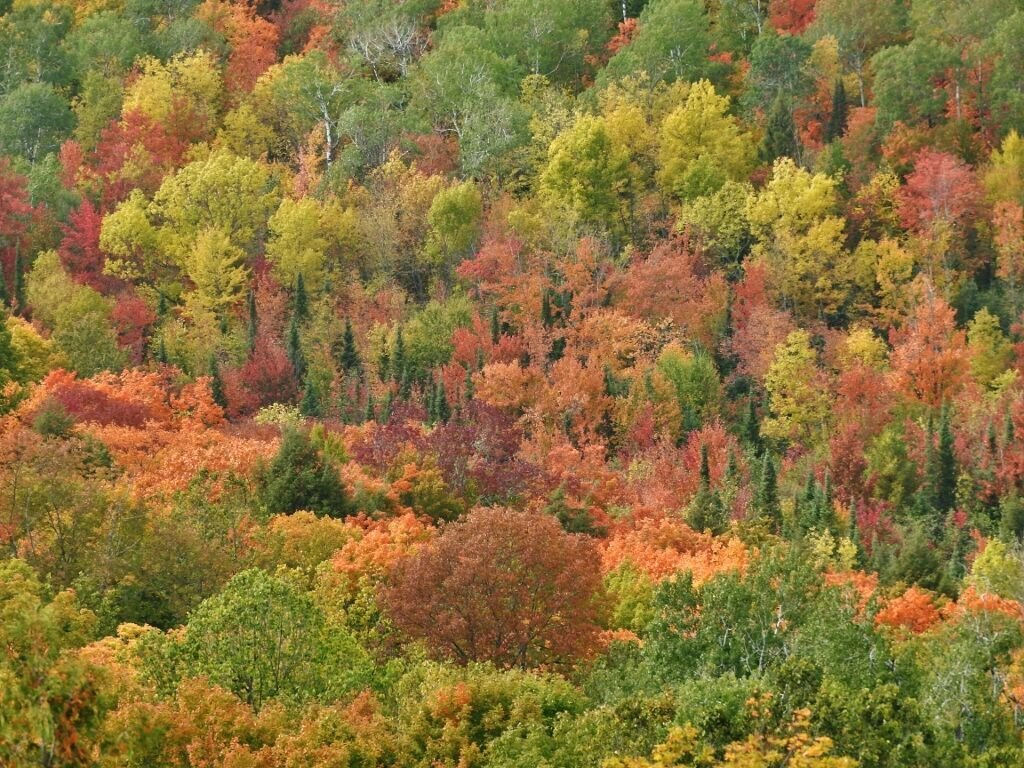 Fall colors from St. Peter's Dome in Wisconsin.jpg