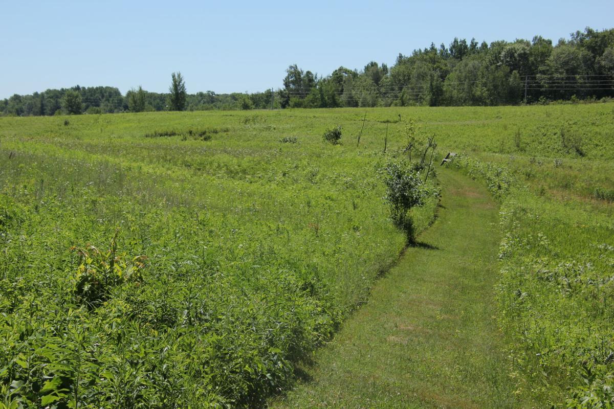 Hunt Hill Audubon Sanctuary 5.JPG
