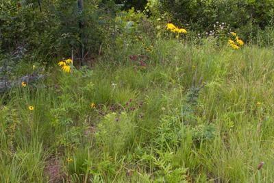 Dan Wiemer's native garden.jpg