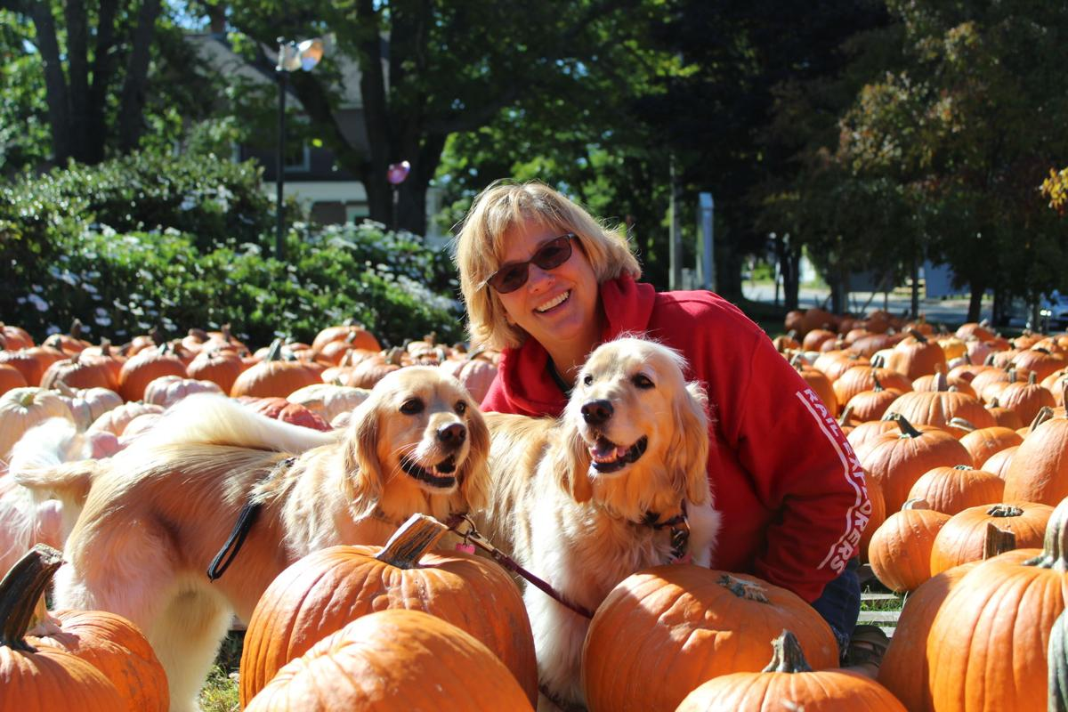 Dogs and Pumpkins