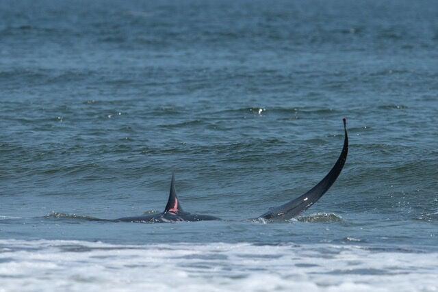 Shark sighting at NTB