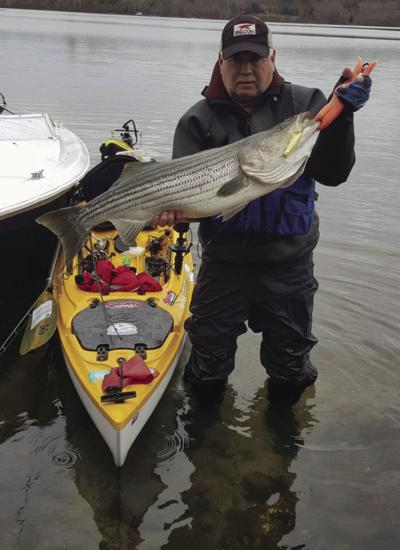 Healthy striped bass population is critical
