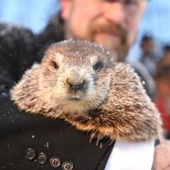 Phil says six more weeks of winter