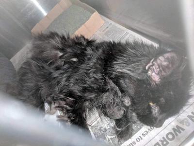 Pet Refuge seeking donations