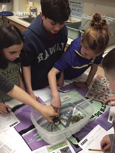 Save the Bay brings starfish, crabs and other sea life to class