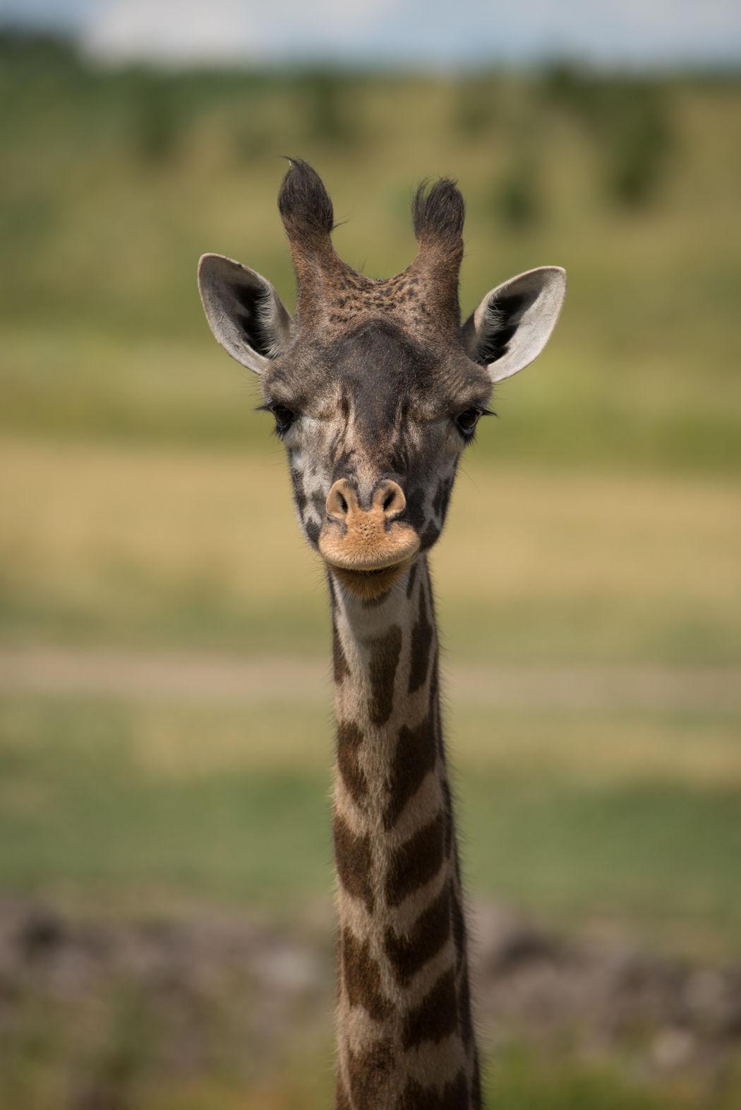 Giraffe Cami