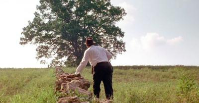 The famous oak tree in The Shawshank Redemption
