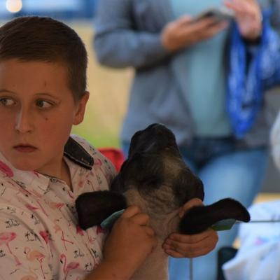 GALLERY: Sheep Show at the 2020 Bellville Junior Fair