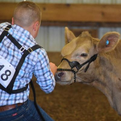 Richland County Fair results begin to filter in after early competitions