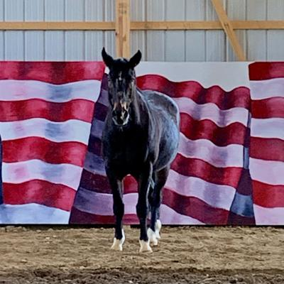 Ranch opens with mission to help veterans, others who have suffered trauma