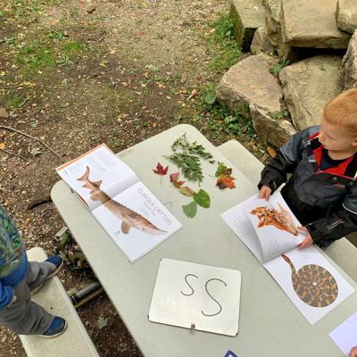 Exploring animal books