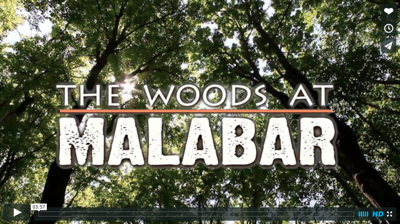 The Woods at Malabar