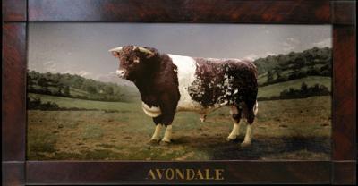 Avondale portrait