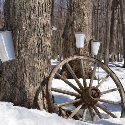 Ashland Park District's first-ever Maple Syrup Day set for Sunday at Cooke Park