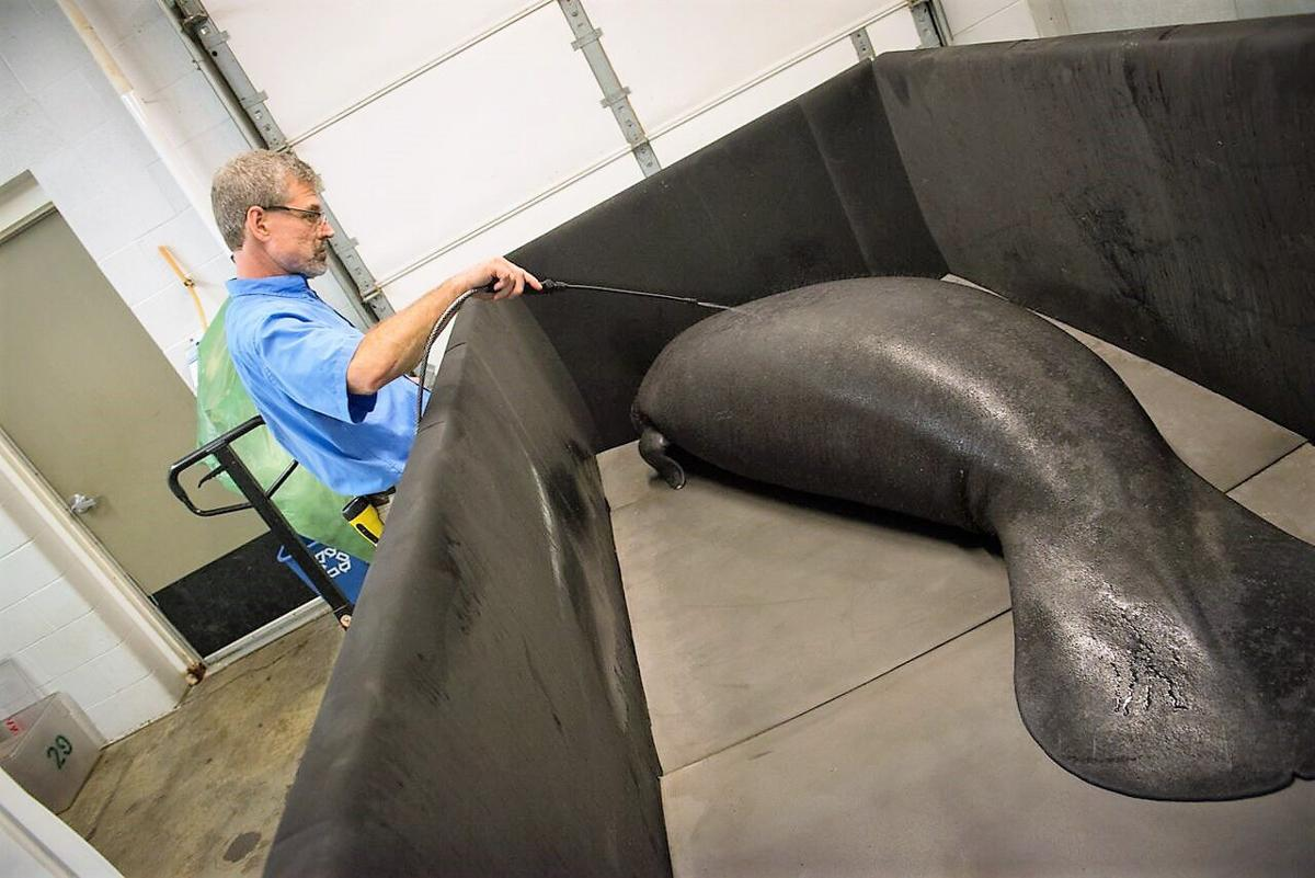 Manatee Move 3129 - Grahm S. Jones, Columbus Zoo and Aquarium_preview.jpeg