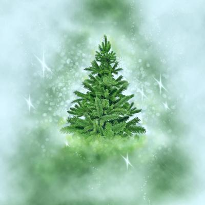 Did you know the first Christmas tree in America is a local story?