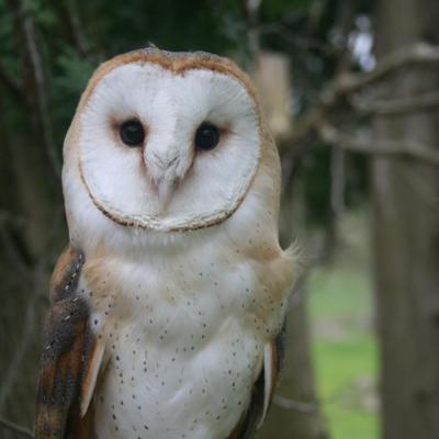Program on owls planned at Lowe-Volk Park on Feb. 10