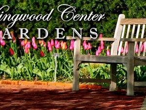 Kingwood's Live on the Lawn concert series begins July 9