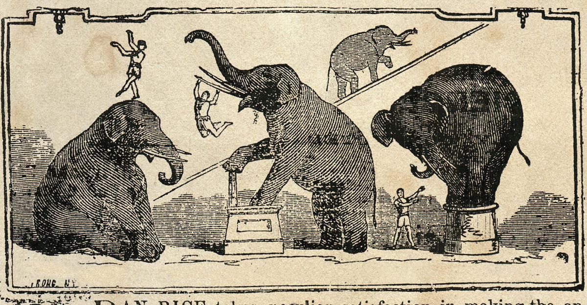Elephants in 1865