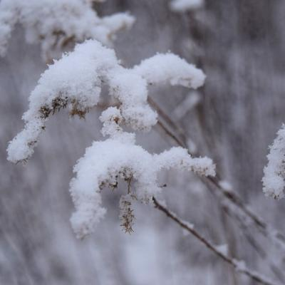 GALLERY: Winter afternoon at Gorman Nature Center