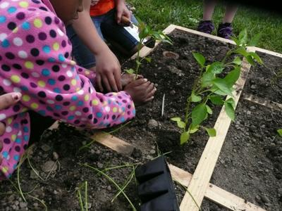Prospect Community Garden aids in providing fresh food to students, local residents