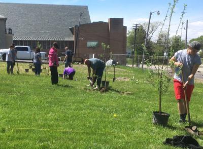 Orchard planting