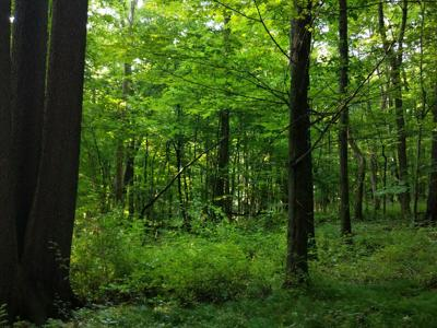 Old-growth forest at Malabar Farm protected by new provision