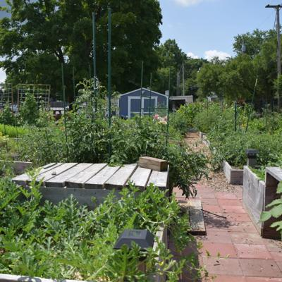 Community garden along Marion Avenue brings hope to Mansfield