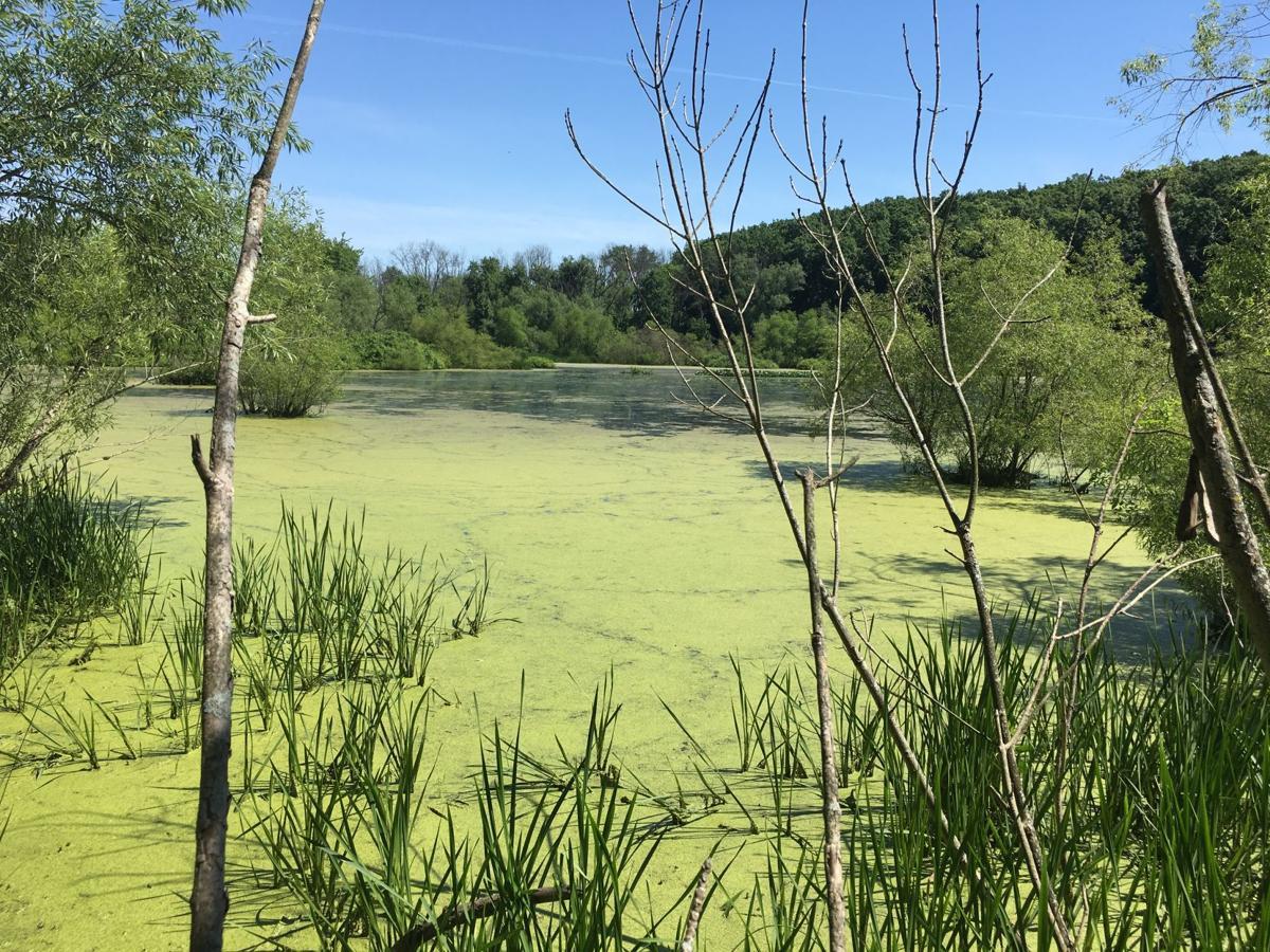 Mifflin Township Land Conservancy