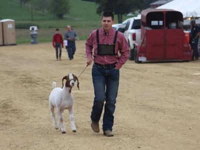 GALLERY: Goat Show at Bellville Street Fair