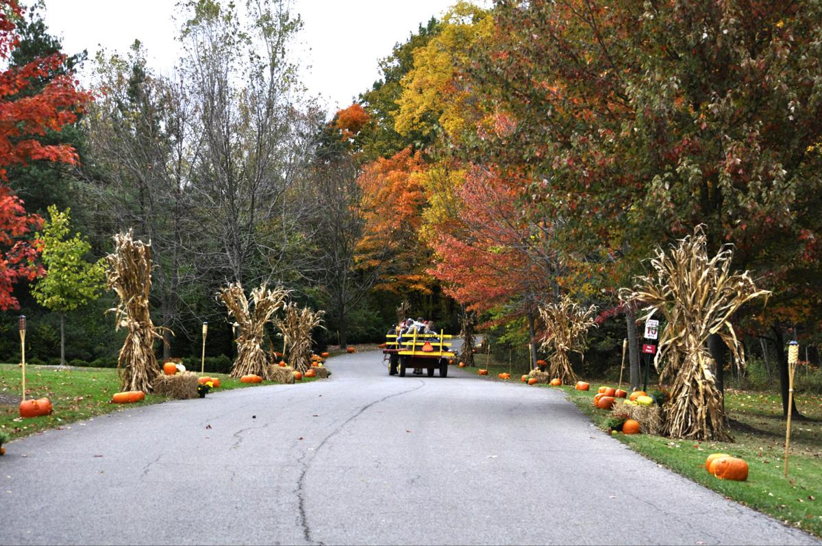 Kingwood to hold annual Pumpkin Glow this weekend   Life & Culture ...