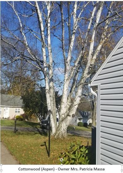 Mansfield Shade Tree Commission announces Heritage Tree program winners
