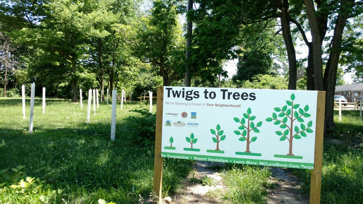 Twigs to Trees