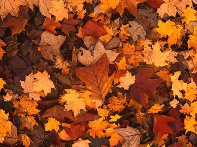 Galion leaf collection to begin on Oct. 19