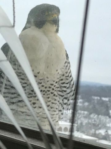 Say hello to our little friend ... Freebird, again