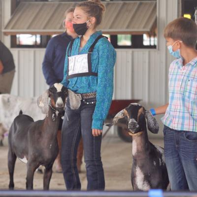 The Show Must Go On: Richland County Fair highlighted by livestock shows, project displays